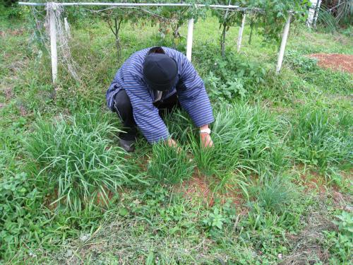 片山さんの菜園