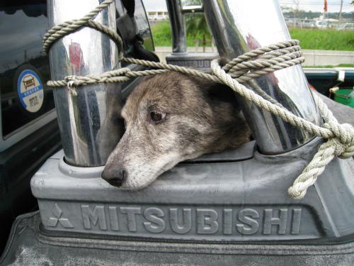 片山さんの愛犬リー