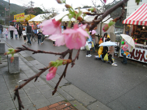 名護の桜祭り