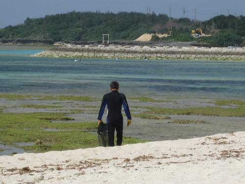 海でアーサー採り