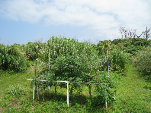 片山さんの畑