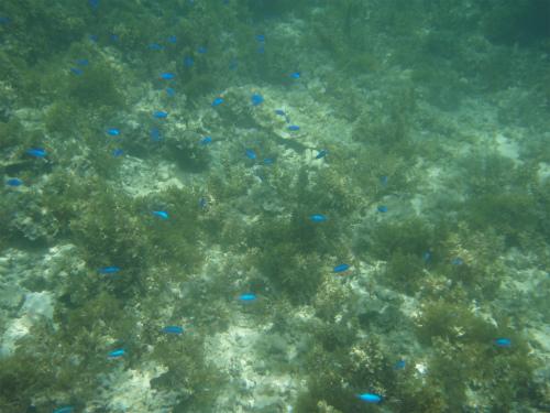 宜野座の海の水中写真