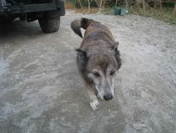 片山正喜さんの愛犬リー