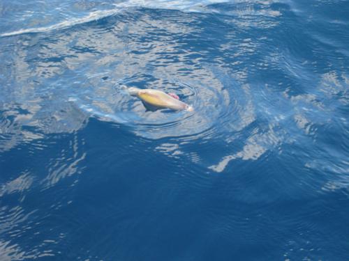 ムーンビーチ沖で釣り