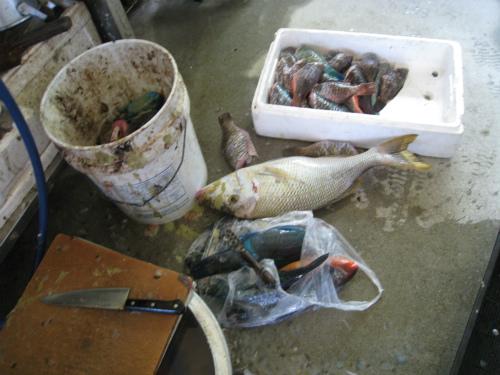 松田美代さんの鮮魚店