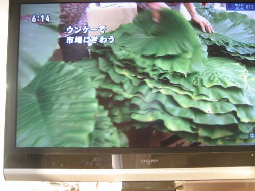 金城正浩さんのお家