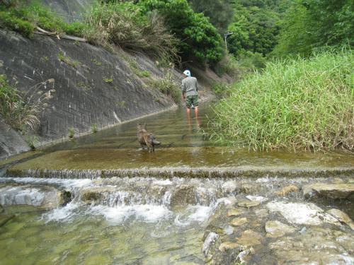 福地ダム下流の川