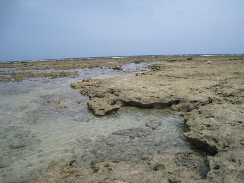 浜下り(ハマウリー)