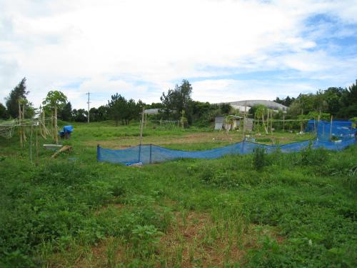 山城久永さんの畑