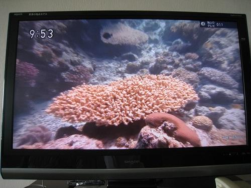 珊瑚礁再生