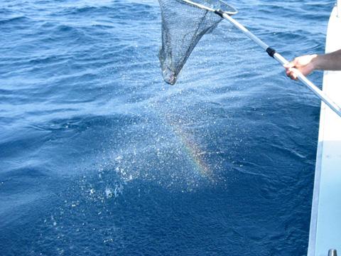 松葉博雄のいい写真撮りたいな:「七色の虹が小さな希望を生む」