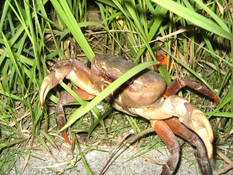 松葉博雄のいい写真撮りたいな:「水の中の魚が網を破るように」