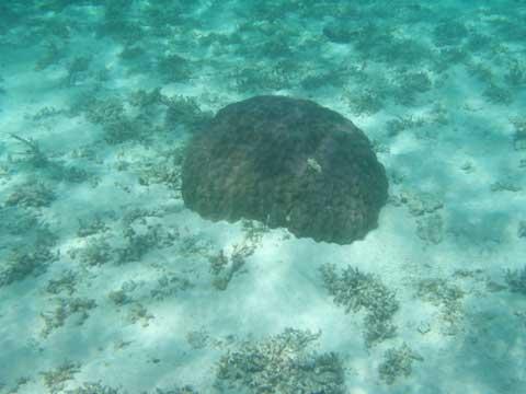 松葉博雄のいい写真撮りたいな:「沖縄県国頭郡本部町瀬底島ビーチの珊瑚」
