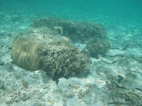 松葉博雄のいい写真撮りたいな:「珊瑚の復活」