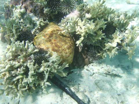松葉博雄のいい写真撮りたいな:「栗の殻のようなウニの殻」