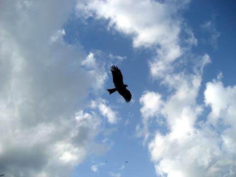 松葉博雄のいい写真撮りたいな:「大空を舞う禽獣」