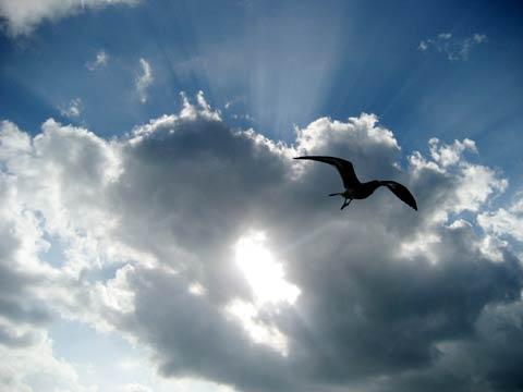 松葉博雄のいい写真撮りたいな:「大空から何かを告げるような、カモメが1羽、私のところに飛んでくる」