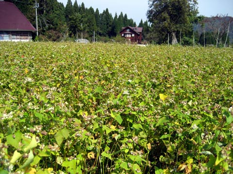 松葉博雄のいい写真撮りたいな:「同根の争い~蕎麦殻で蕎麦を炒る~」