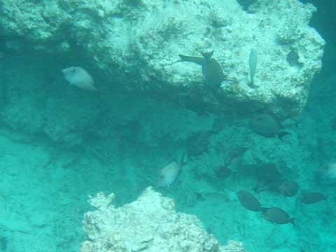 松葉博雄のいい写真撮りたいな:「珊瑚礁に集う熱帯魚と群衆行動」