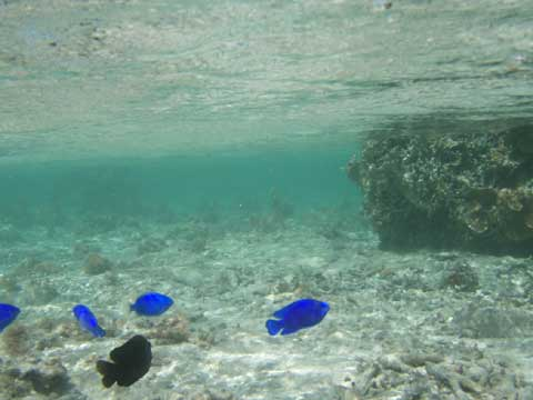 松葉博雄のいい写真撮りたいな:「海の水面の波は、地上の雲のようにルリスズメを覆う」
