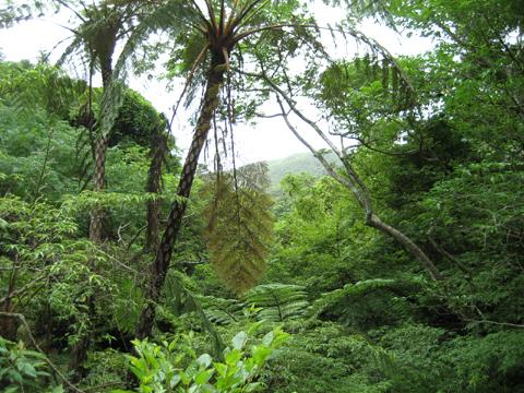 松葉博雄のいい写真撮りたいな:「亜熱帯雨林の水の循環」