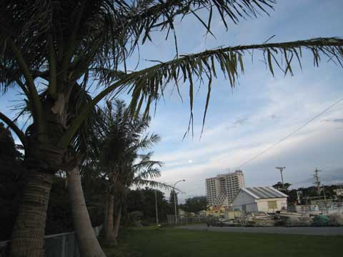 松葉博雄のいい写真撮りたいな:「台風に痛めつけられた椰子の葉は、今、リハビリ中です」