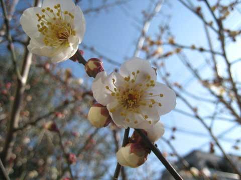 松葉博雄のいい写真撮りたいな:「論より証拠、春が来た」