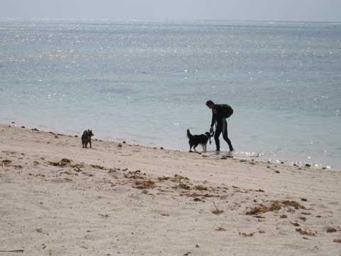 松葉博雄のいい写真撮りたいな:「忠犬リーの焼き餅も無理もありません」
