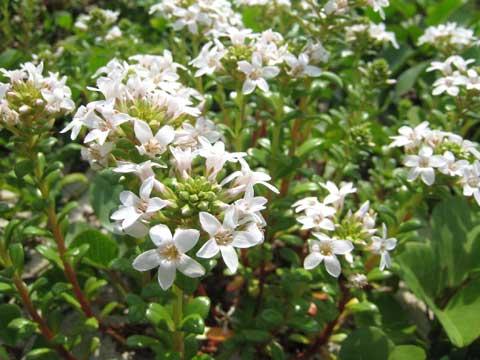 松葉博雄のいい写真撮りたいな:「春なれば、野辺の花にも光あり」