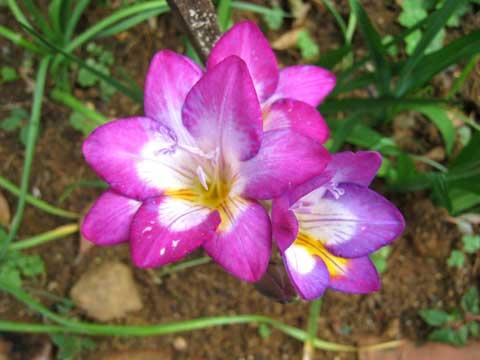 松葉博雄のいい写真撮りたいな:「前を歩いて、前を見ていたら、見えない美しい花が足下には咲いています」