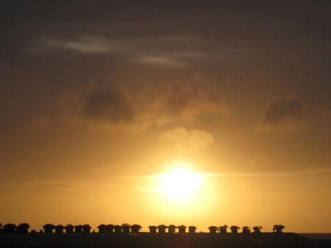 松葉博雄のいい写真撮りたいな:「夏至の夕日は雲を染め、植物を染め、人を染めて、西に沈んでいきます」