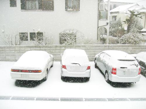 車の上には雪が白く積もっています