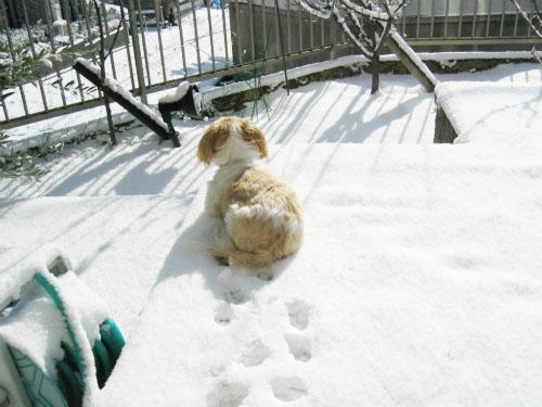 りんりんは雪の上に座り込みました