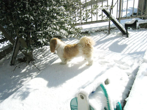 りんりんは、雪を匂っています