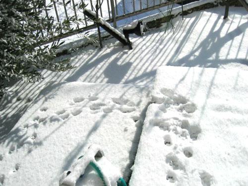 雪の上にりんりんの足跡