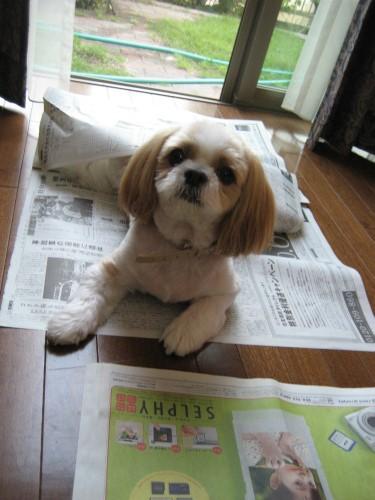 りんりんと新聞