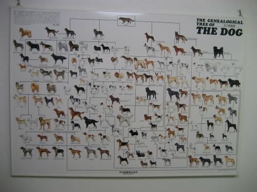 病院の壁には、たくさんの種類の犬のポスターがあります
