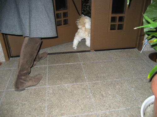 防寒コートを着て、いつものように夜の散歩に出かけます