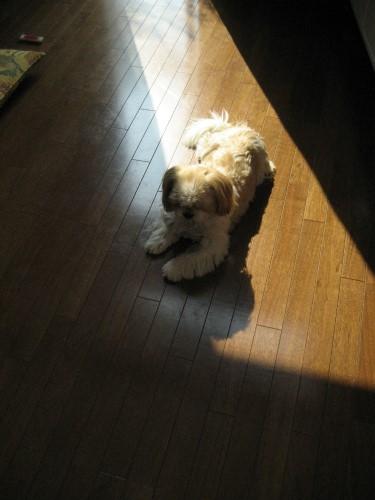りんりんは、温かくなった日差しで、何やら考え事をしています