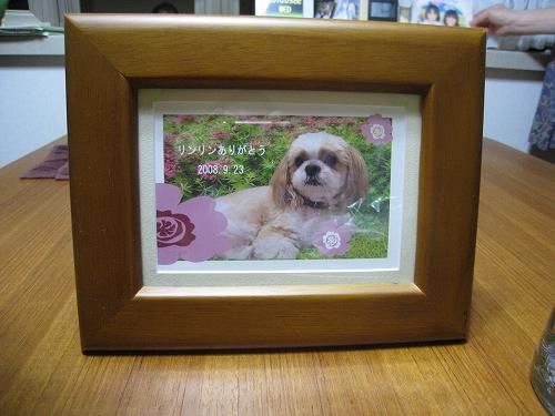 愛犬 追悼