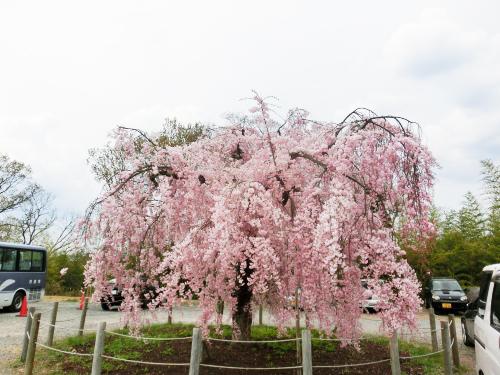画像:2012年4月19日(木)から