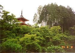 美作の高野山と言われる法輪寺、別名紫陽花寺