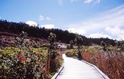 ボルケーノ国立公園 サルファー・バンクス・トレイル