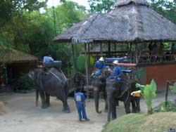 象に乗って散歩をします