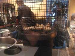 鶏料理SUN