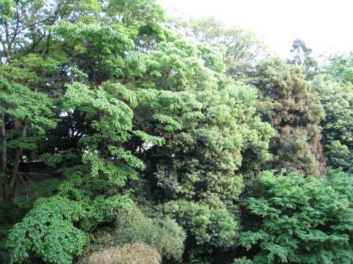 京都 森林