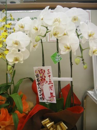 創業35周年のお祝いのお花