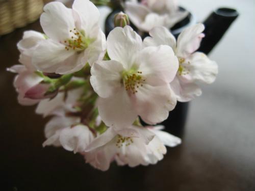湯郷津山お花見旅行