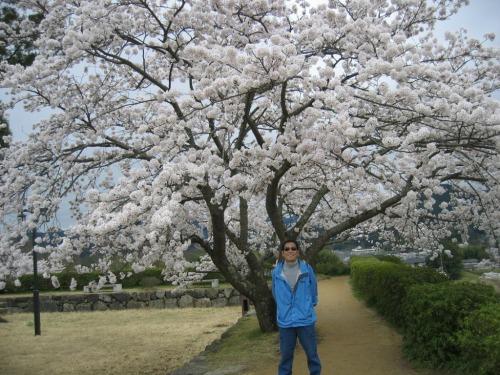 篠山城の桜