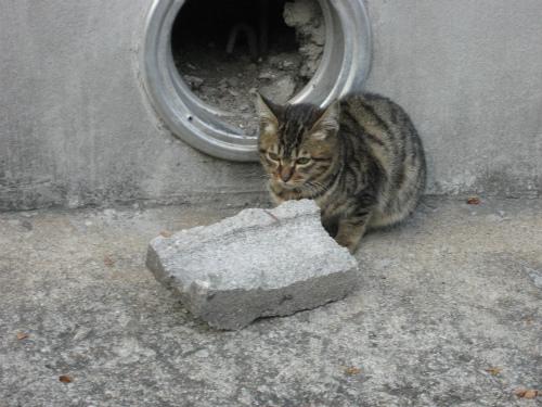 大学に住み着く子猫
